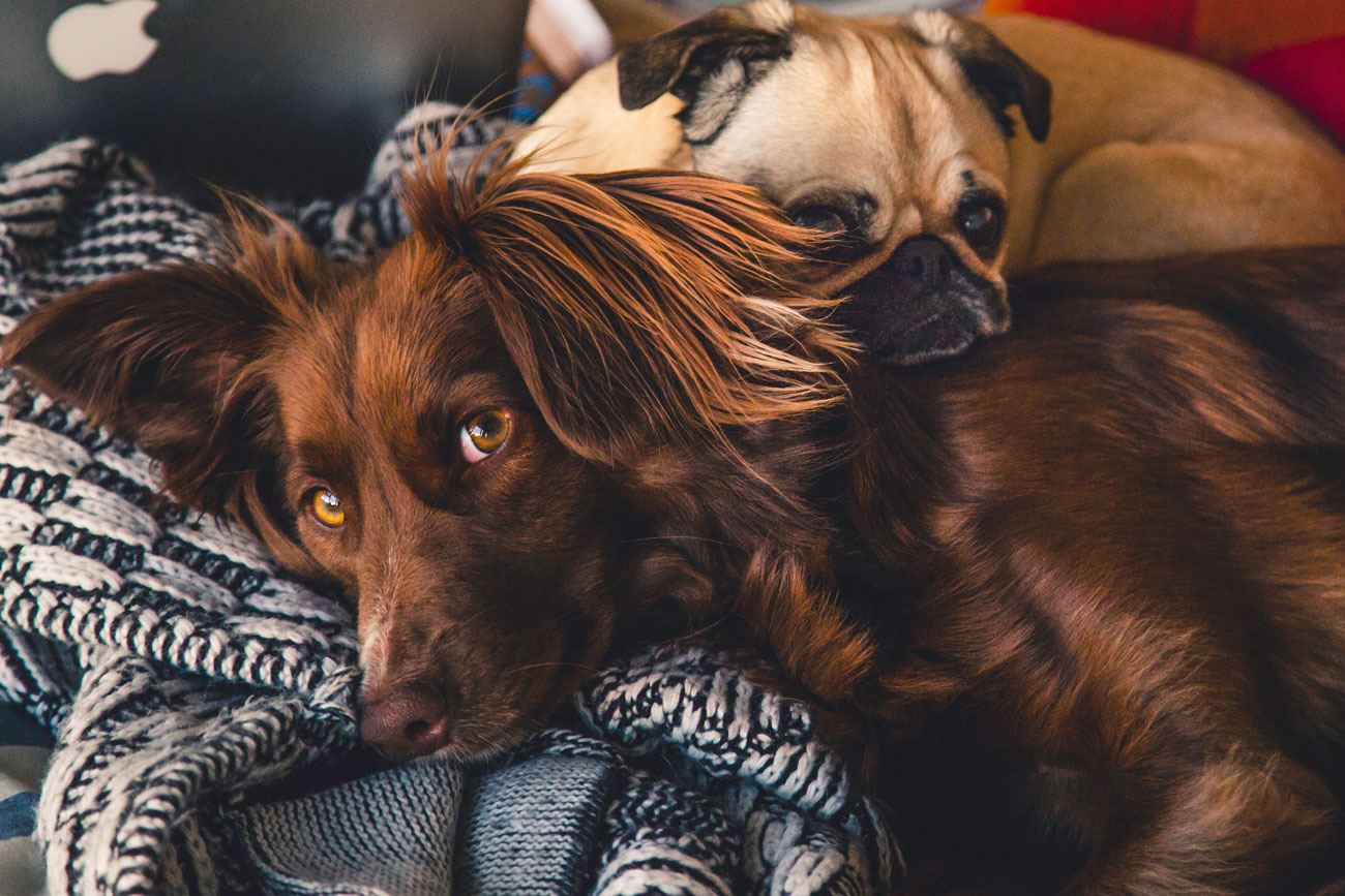 seguro para animais de estimação